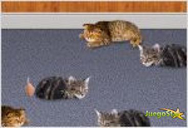 Juego  despierta gatitos
