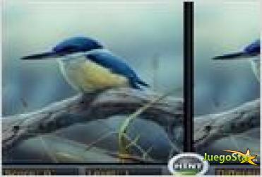 Juego  spot the differencebird las diferencias