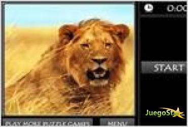 Juego  lion jigsaw puzzle rompecabezas de un hermoso leon